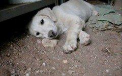 cani avvelenati: sono scattate le prime denunce | Dogalize Gli avvelenamenti dei cani sembrano non trovare sosta. Almeno 5 cani sono stati avvelenati e sono morti dopo una lunga agonia vicin