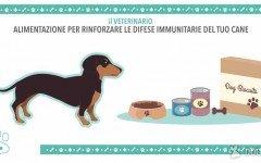 Difese immunitarie cane: Una corretta Alimentazione del cane !
