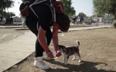La historia de Aslan: 500 km con su cachorro