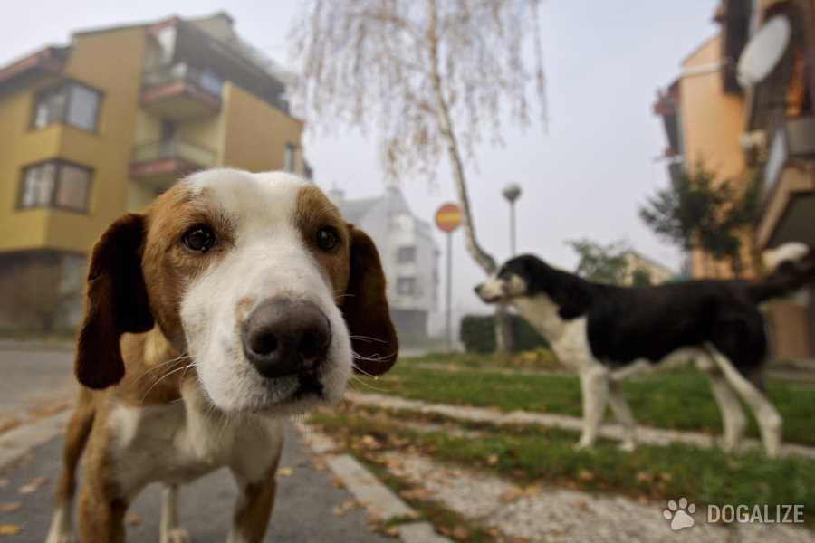 Cani bastonati fino alla morte
