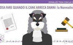 Cane causa danni ?. La normativa e l'assicurazione per cani