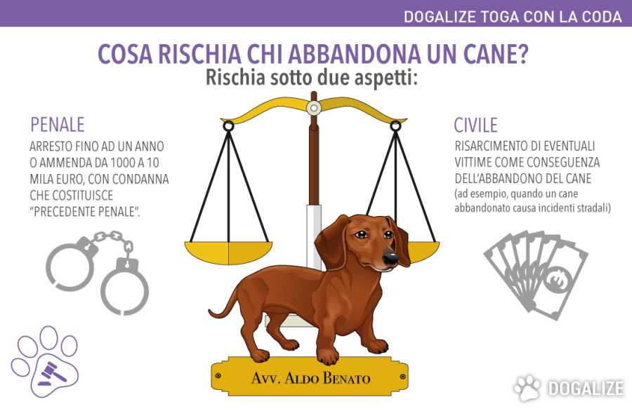 legge abbandono animali legge abbandono cani