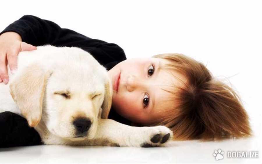 Una mascota mejora un hogar: vemos como!