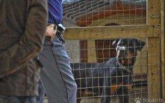 Oipa Maltrattamento animali Rottweiler