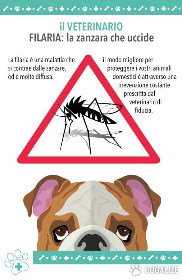 Filaria cane: Filariosi la malattia del cane