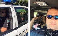 Poliziotto si prende cura del cane di una vittima stradale