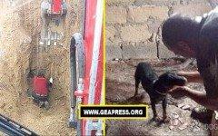 Vigili del Fuoco del comando di Palermo salvano due poveri cagnolini in pericolo, che erano rimasti intrappolati in un cunicolo nel fango