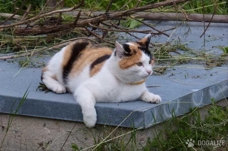 Gattino imprigionato per 3 giorni in una casa | Dogalize
