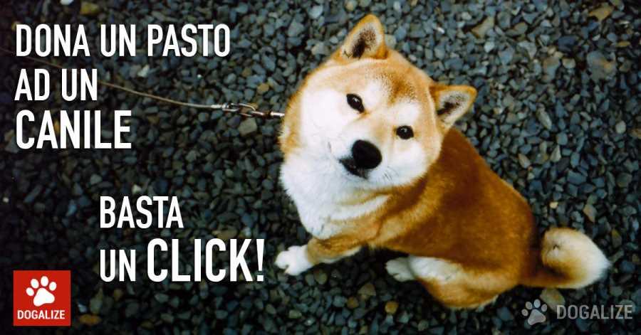"""L'iniziativa Solidale di Dogalize """" Dona un pasto con un click"""" dura 24 ore a partire dalla pubblicazione dell'annuncio sulla pagina Facebook"""