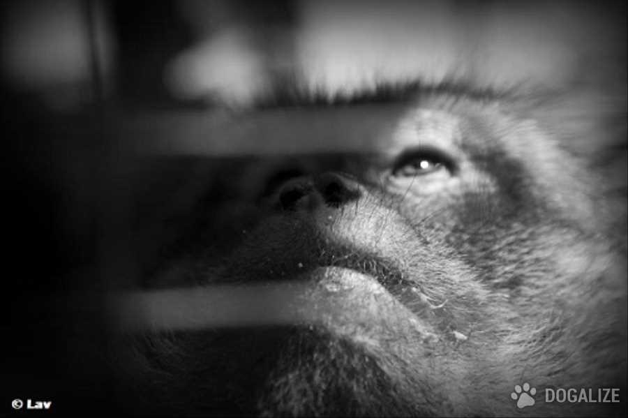Maltrattamento animali: 4 mozioni targate M5S, Sel e Pd, per l'abolizione dello sfruttamento degli animali nei circhi, nei test e nella filiera commerciali