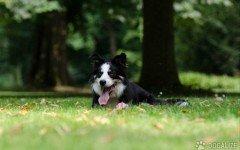 Per contrastare il fenomeno per lo più estivo dell'abbandono il Comune di Firenze offre la possibilità di affidare il proprio cane al Parco degli Animali.