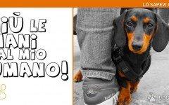 Cane geloso: I cani provano forti sentimenti