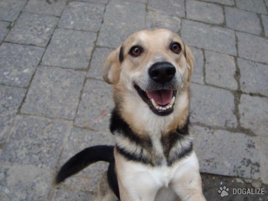 Smarrito cane: Artista da strada va in coma
