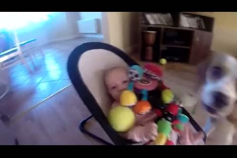 Un buenisimo video de un beagle culpable y de una bebè