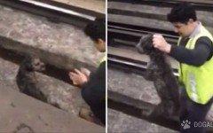 Chofer para un tren para rescatar un perro