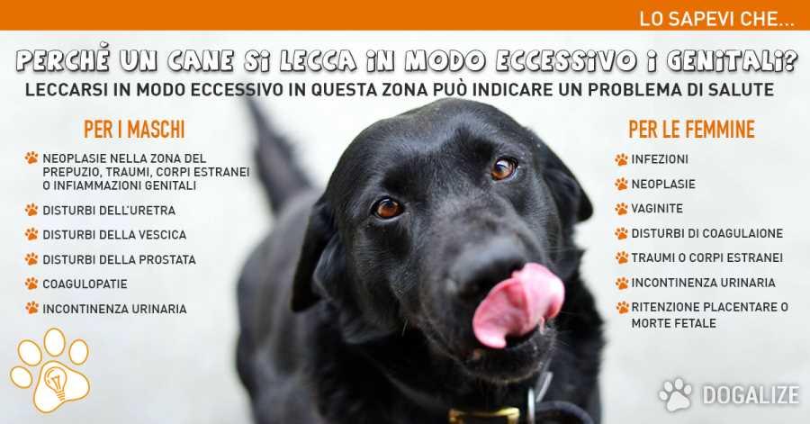Cani si leccano genitali : perché lo fanno? Igiene o patologia