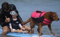La Surf Dog Ricochet ha deciso di organizzare una giornata di lezioni di surf con un cane, per i bambini malati di Sma, l'atrofia muscolare spinale.