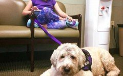 Vietato a bambina di portare in classe il suo cane guida
