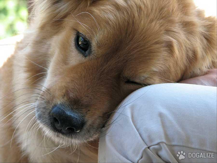 """Segnali del cane: come ti dice """"Ti voglio bene""""?"""