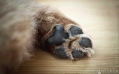 Dogs Care: Protecting your dog paws