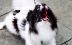 5 Tips to Solve Your Dog Barking Problem