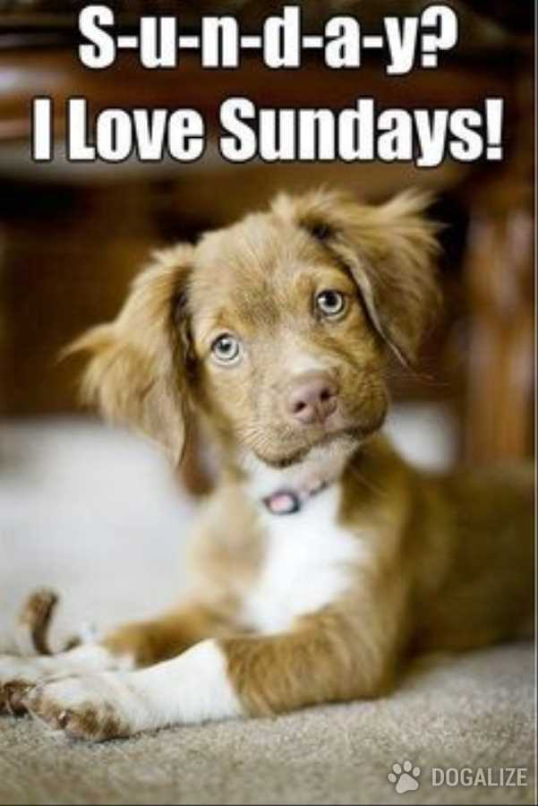 Happy Sunday, Dogalizers!