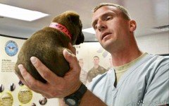 pronto soccorso veterinario
