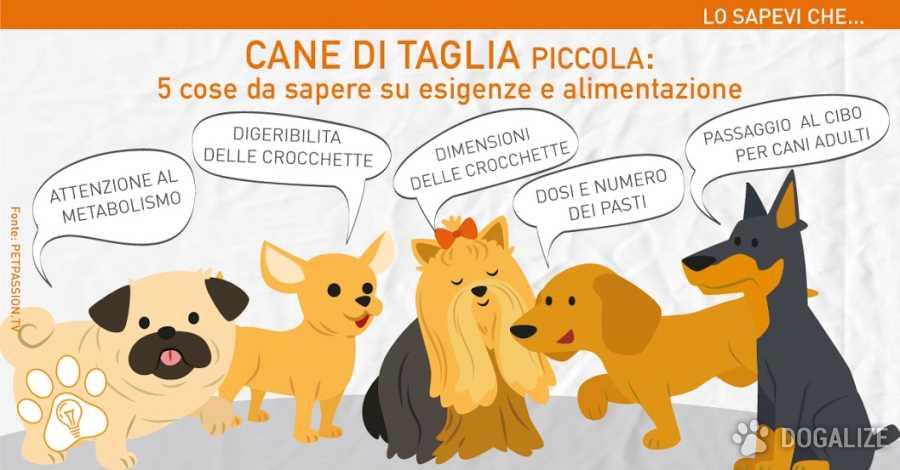 Alimentazione cane di taglia piccola