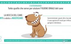 Veterinario Online: l'igiene orale del cane