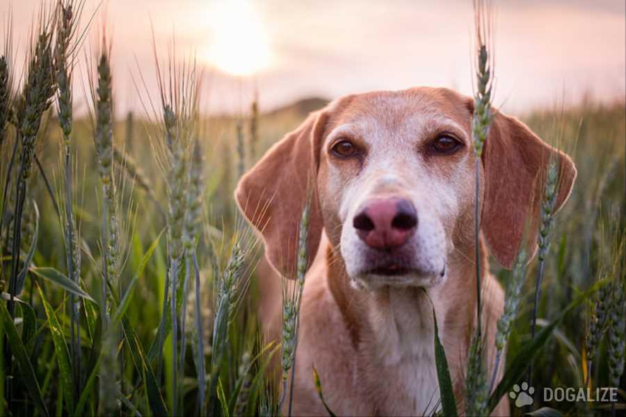 Il cane che guarda le stelle