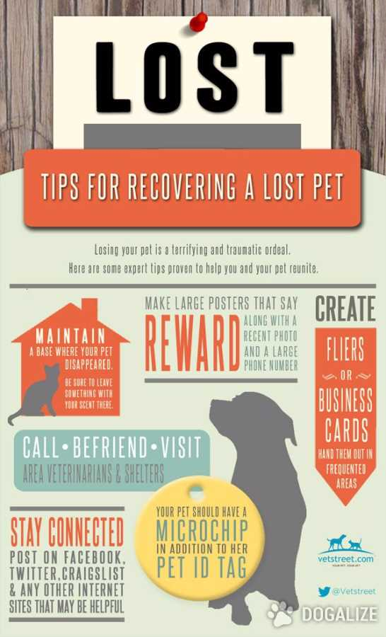Some good advice to recover a lost pet