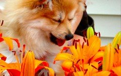 Dog allergies: Dogs can suffer from fall allergies