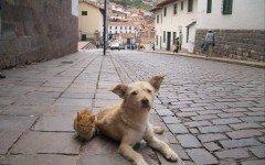 Allarme per cani e gatti