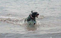 cucciolo di cane aliscafo