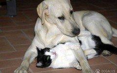 Cane salva un gatto