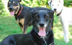 Rifugio per cani area di sgambamento