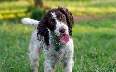 Esercizio fisico cani