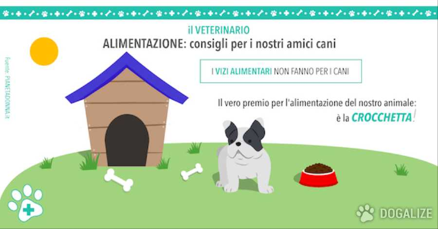 Alimentazione dei cani: consigli per i nostri amici a quattro zampe