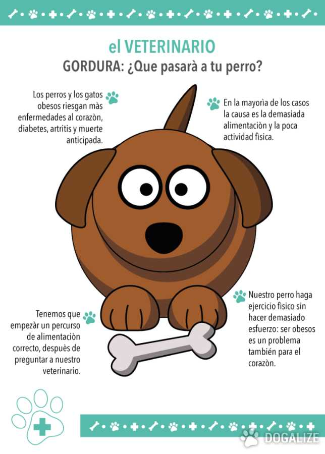 perros obesos obesidad en los animales