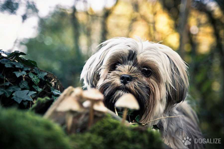Dogs and mushrooms: How to keep dogs from eating them?