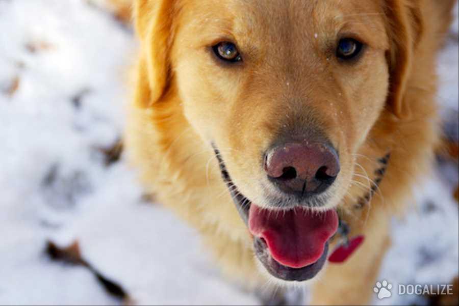 freddo cane inverno