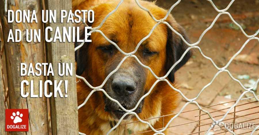 dona un pasto con un click ad un cane in un canile