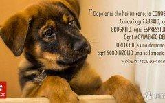 McCammon frasi cani frasi cane