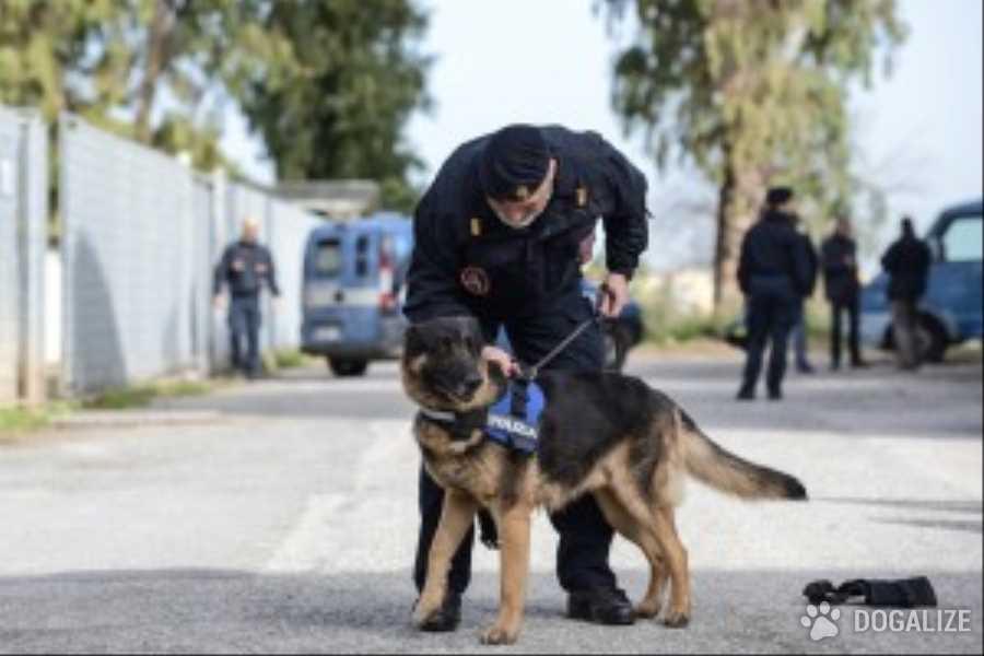 cani antiesplosivo