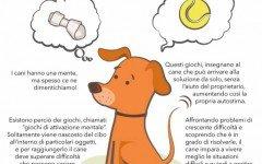giochi di attivazione mentale per cane giochi di attivazione mentale per cani
