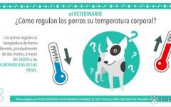 ¿Cómo regulan los perros su temperatura corporal?