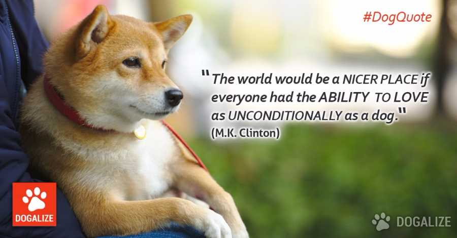 A dog loves unconditionally!