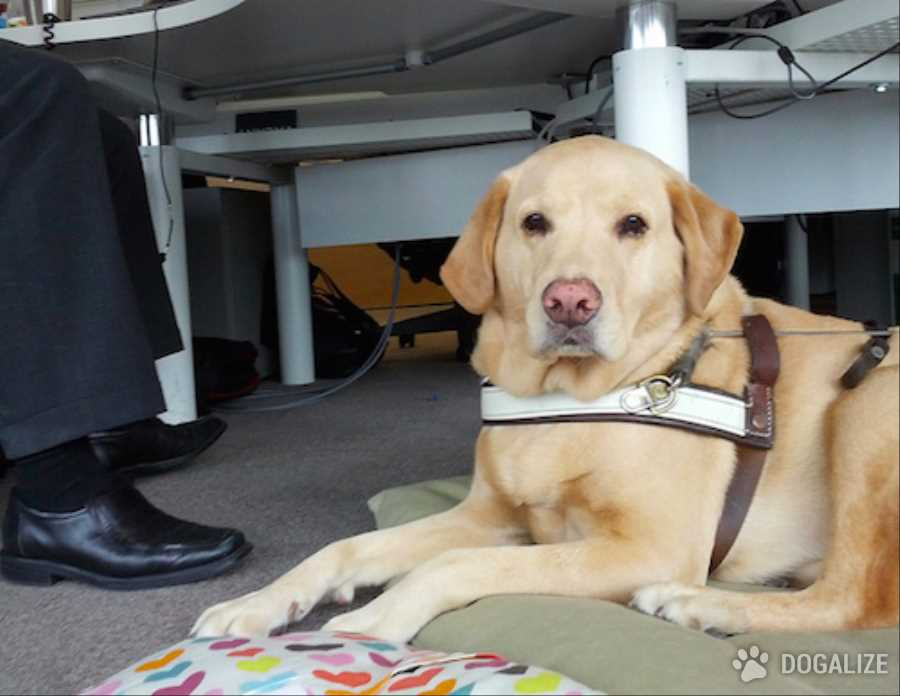 More workplaces welcoming canine colleagues