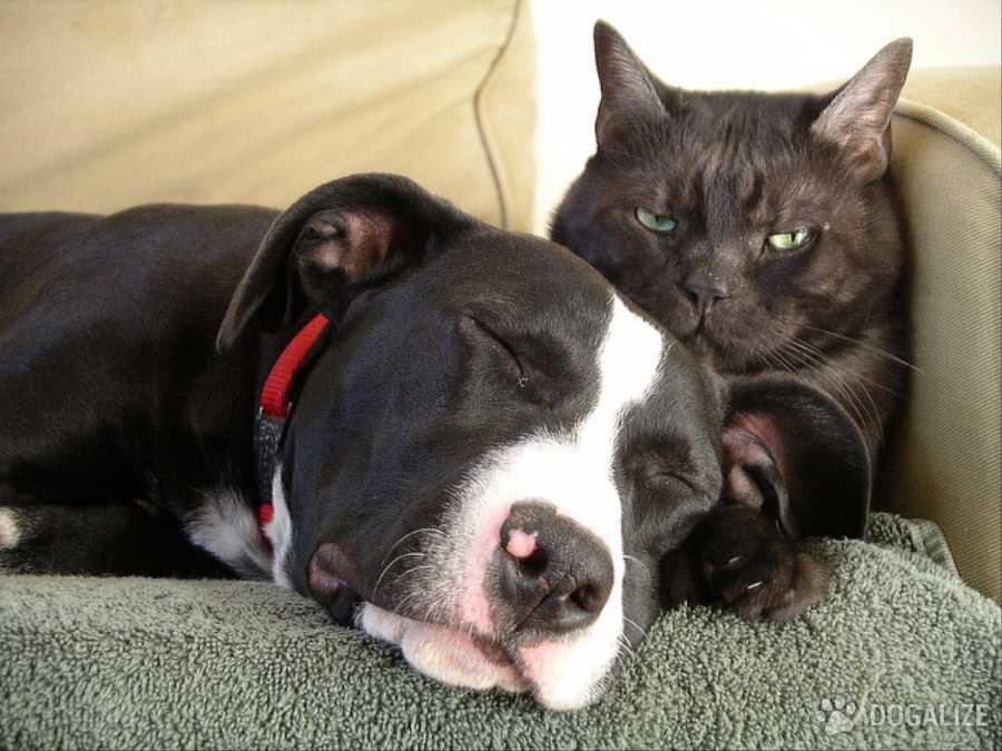 salvano cani e gatti