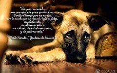 Pablo Neruda y el amor por los perros